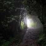 Misty path trekking nepal